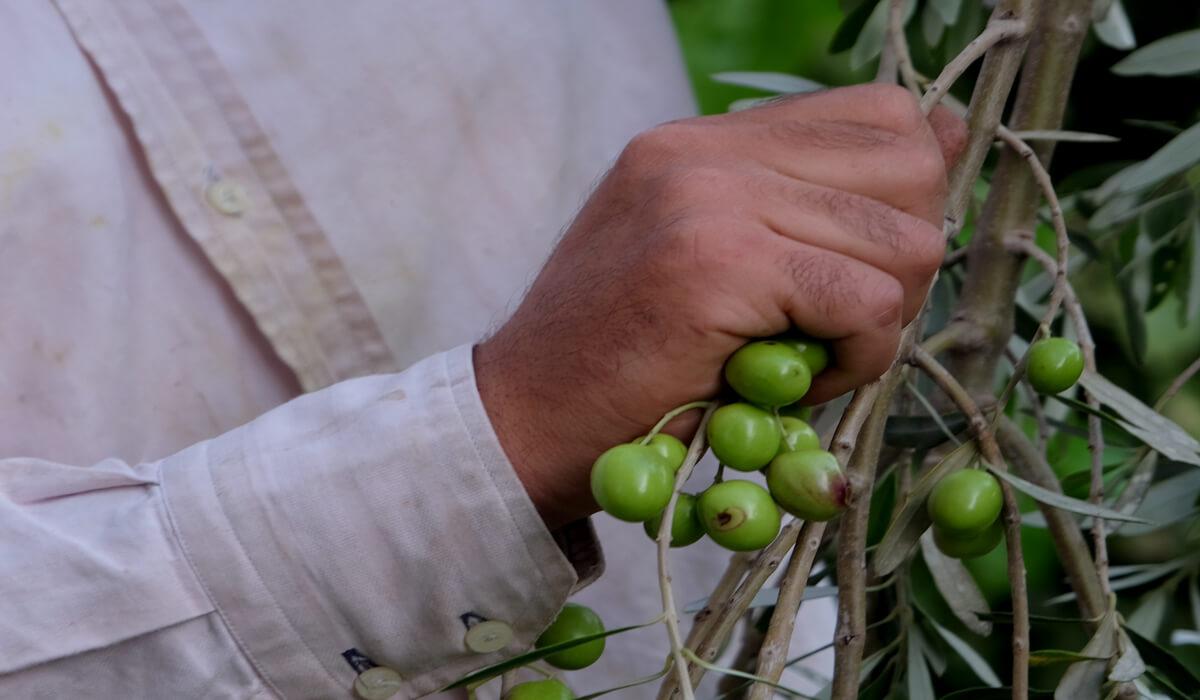 Oliwa z oliwek Fratelli Valenziani
