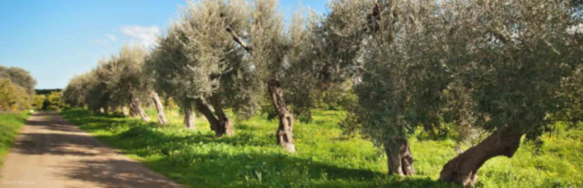 Agroturystyka Sycylia